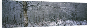 Winter Woodland I by Richard Osbourne