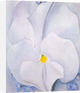 White Pansy by Georgia O'Keeffe