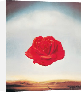 The Meditative Rose by Salvador Dali