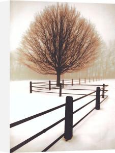 Solitude (large) by David Lorenz Winston