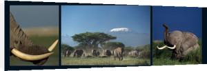 Elephants and Kilimanjaro by M & C Denise Hout