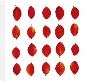 Leaves by Austin Harragin