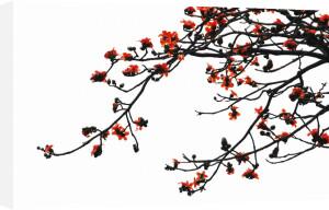 Magnolia campbellii 'Charles Raffill' by Jane R. Wood
