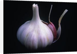 Allium sativum, Garlic by Rosemary Calvert
