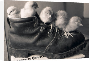 Chicks in a boot by Mirrorpix