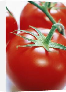 Lycopersicon esculentum, Tomato by Richard Freestone