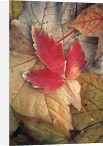 Leaf by Rob Matheson