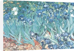 Irises in Garden by Vincent Van Gogh