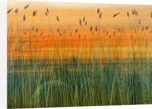 Golden Bayou by Robert Holman