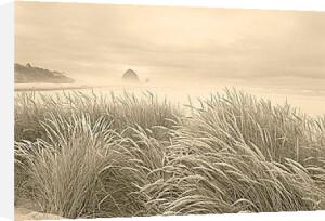 Dune Breeze by Adam Brock