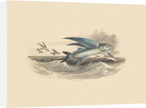 Flying Fish I by Anonymous