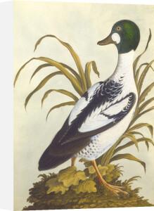 Silesian Birds I by Anonymous