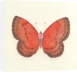 Butterfly I by Sophie Golaz
