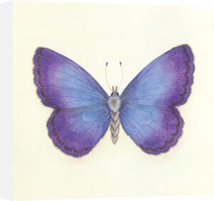 Butterfly II by Sophie Golaz
