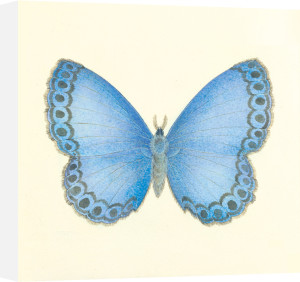 Butterfly IV by Sophie Golaz