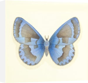 Butterfly VII by Sophie Golaz