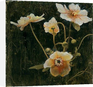 Midsummer Night Bloom II by John Douglas