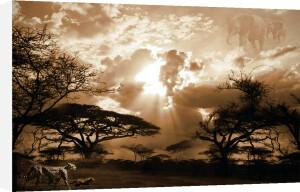 African Mosaic by Bobbie Goodrich