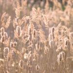 Reeds Back Light by Assaf Frank