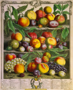 Fruits of the Season - Autumn by Robert Furber