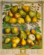 Fruits of the Season - Spring by Robert Furber