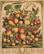 Fruits of the Season - Summer by Robert Furber