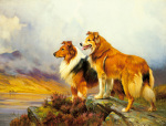 Collies in a Highland Landscape by Wright Barker