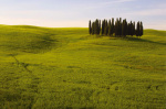 Cypress Trees Tuscany by Bill Philip