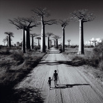 Allee des Baobabs by Chris Simpson