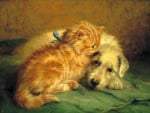 Kitten by John Fitz Marshall