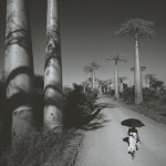 Allee des Baobabs II by Chris Simpson
