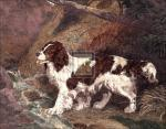 The Spaniel by Ramsay Reinagle