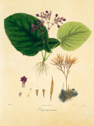 Unpublished East Indian Plants I by Nathaniel Wallich