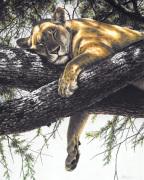 Lake Manyara Lioness