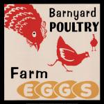 Barnyard Poultry - Farm Eggs