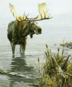 Silent Waters by John Seerey-Lester
