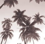 Palm Silhouette by Michael Kahn