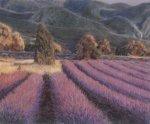Lavendelfelder by Eleonore Baur-Brinkman