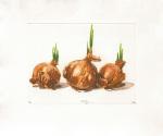 Onion Trio, 2000 by Robert C. Rore