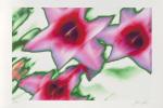 Star Tulip (2002) by Norbert Schaefer