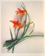 Lilie Ikebana by Gerhard Treichel