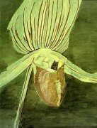 Orchid, 1998 by Luc Tuymans