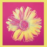 Daisy c.1982 (fuchsia & yellow)