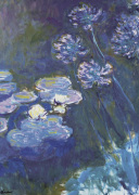 Water Lilies & Agapanthus