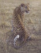 Leopard by Dan Smith