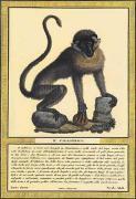 Monkey I