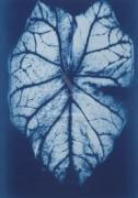 Leaf Study #1 2002