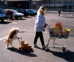Woman and dog shopping by John Drysdale