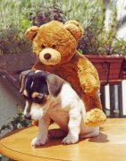 Dog with its teddy by Heinz Krimmer