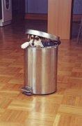 Jack Russell in a bin by Heinz Krimmer